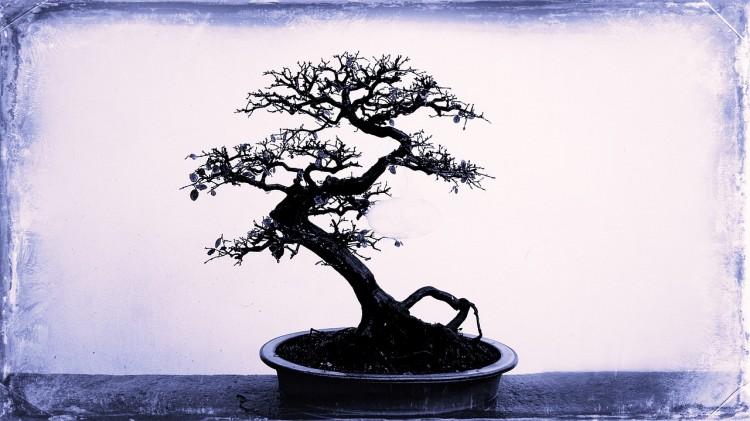 bonsai venture capital